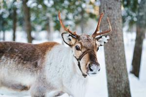 This scientific fact about Santas reindeer will blow your mind