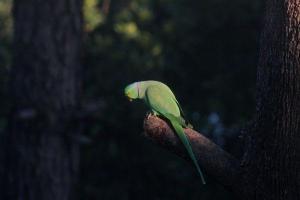 Watch: Parrot shows off his impressive vocal range