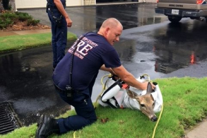 Hero firefighters rescue a mother and baby deer trapped in a storm basin